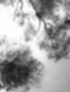 Bildschirmfoto 2018-10-15 um 20.27.33_ed