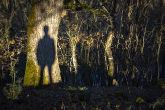 forest-ghost-shadow.jpg