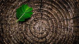 green-leaf-plant-on-brown-wooden-stump-1