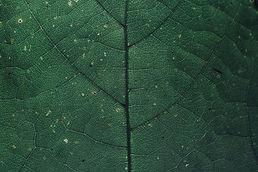 pattern-leaf-green-foliage-1268129.jpg