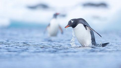 Antarktis_2018_18808.jpg