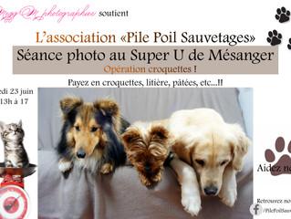 """Séance photo """"Opération croquette"""""""
