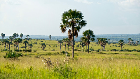 Uganda's nature is so beautiful!