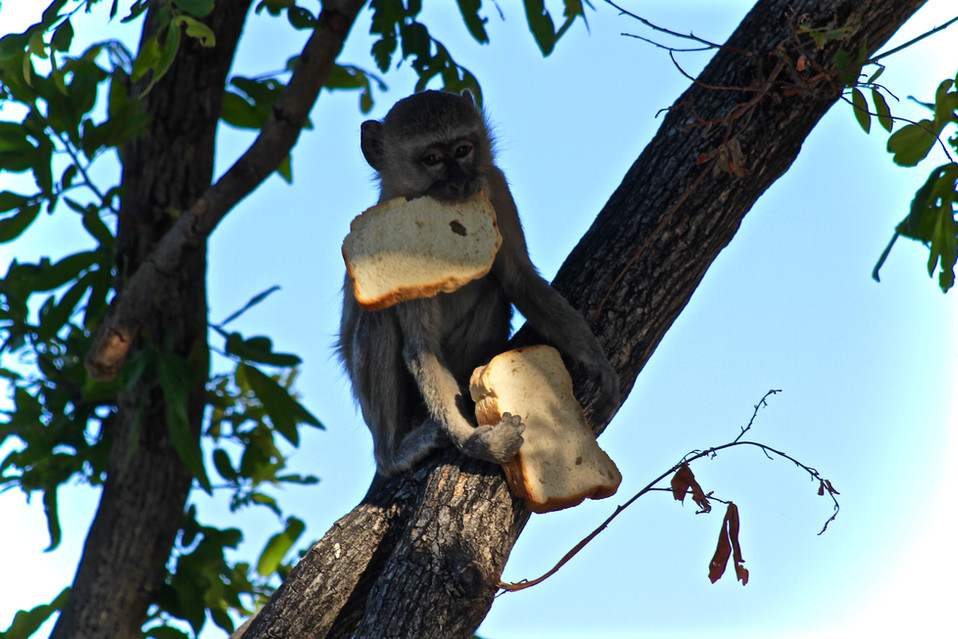 See this monkey enjoy his stolen bread. ;-)
