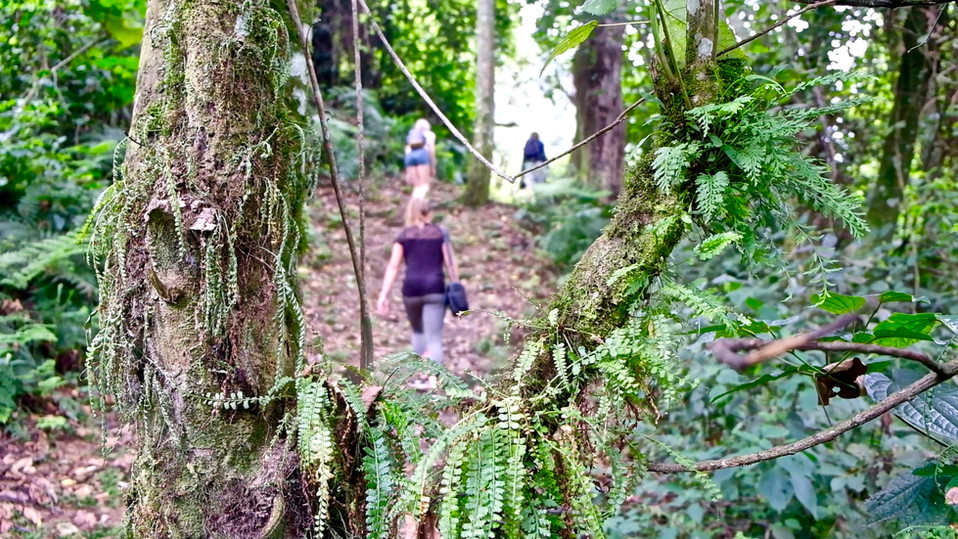 One day hike in the rainforest of Rwenzori National Park.