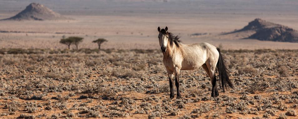 Wild horses in a beautiful senary
