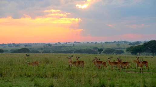 Do you also want to see game drives and lots of animals? Then leave around sunrise, then you will spot many animals.