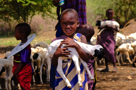 Feedingtime for the baby goats.