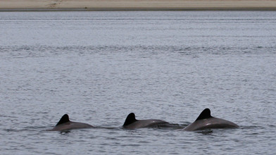 Spotted dolphins from our campspot
