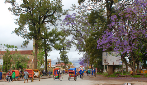 2 months per year these Jacaranda trees have a beautiful purple color. In addition, you see here a traditional means of transport where men pull the cart barefoot. A totally different planet than where we come from. What do we have a respect for these people.