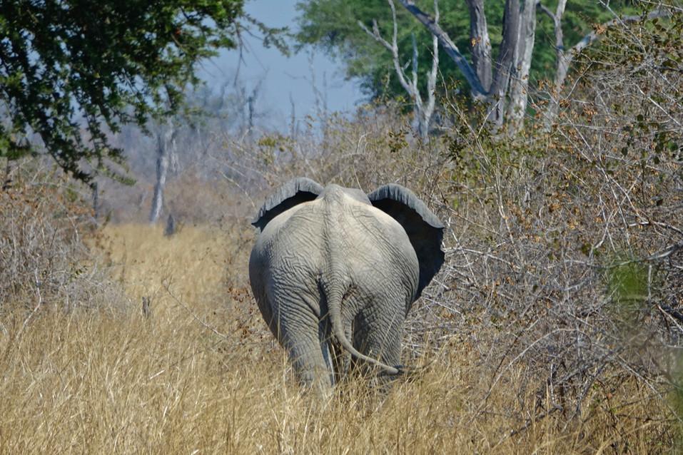 Spotted a elephant while walkingsafari.