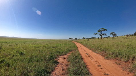 On safari in Tarangire National Park. The contrast is beautiful.