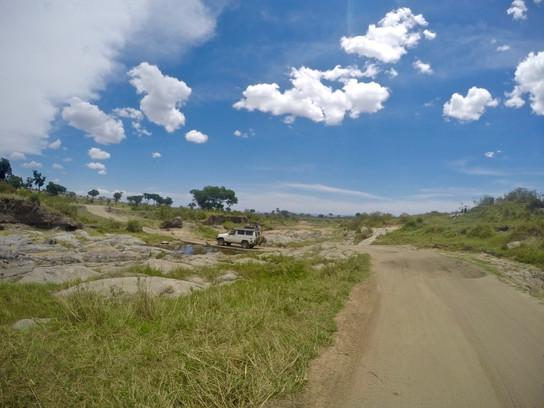 Safari in Serengeti.