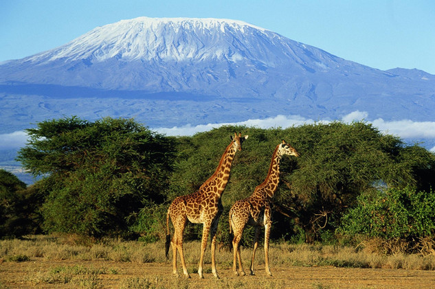 In this park you can make beautiful pictures of animals with the Kilimanjaro (if your are lucky) on the background.