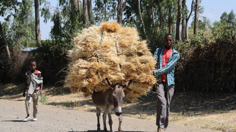 The Ethiopiers using a donkey for everything, transport, purcashe. ;-)