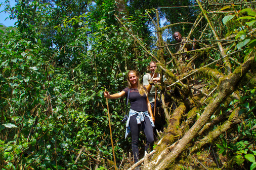 Looking for the mountain gorillas.