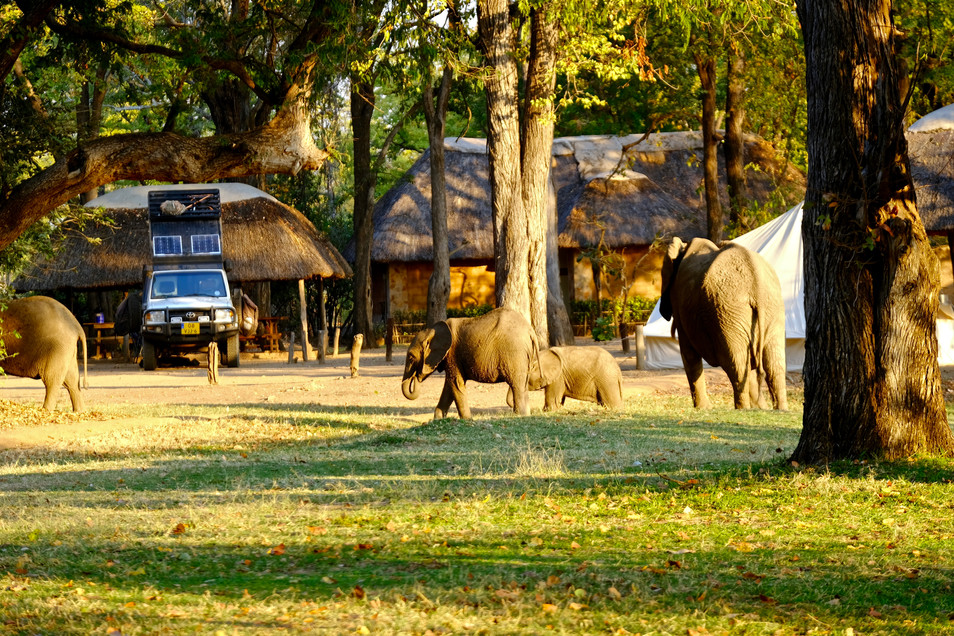 At Elephant Camp in South Luangwa, the elephants simply walk over the campsite. An unbelievable gift experience and they come so close!