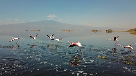 Flamingo's at Lake Natron.