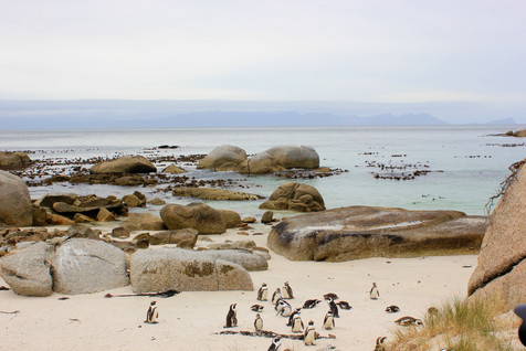 Boulders Beach is a sheltered beach consisting of small bays between granite stones. It is on False Bay, the east coast of the Cape Peninsula, between Simon's Town and Cape Point, near Cape Town.  The main tourist attraction is a colony of African Penguins located in 1982.
