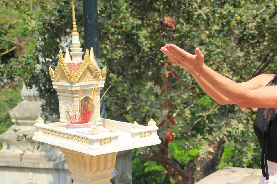 Let my wish come true _ Phnom Penh
