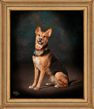 Pets welcome for our Family Portraits