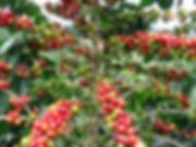 arbre - Copy.jpg