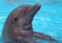 baby-dolphin-1-1372890.jpg