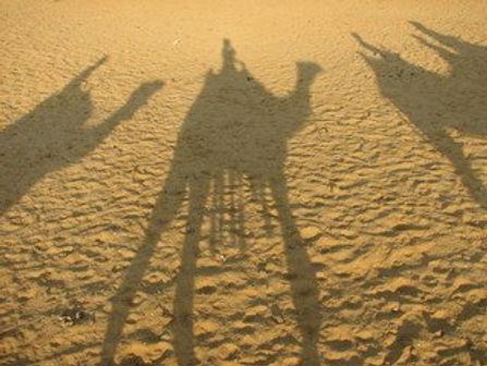 camel-shadows-1370980.jpg