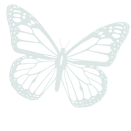 butterfly_edited_edited_edited.png