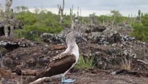 Der Traum von Galápagos
