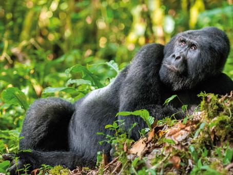 "Buchempfehlung ""Perle Afrikas - Faszination Uganda"""