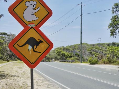 Organisiere deine Reise nach Australien