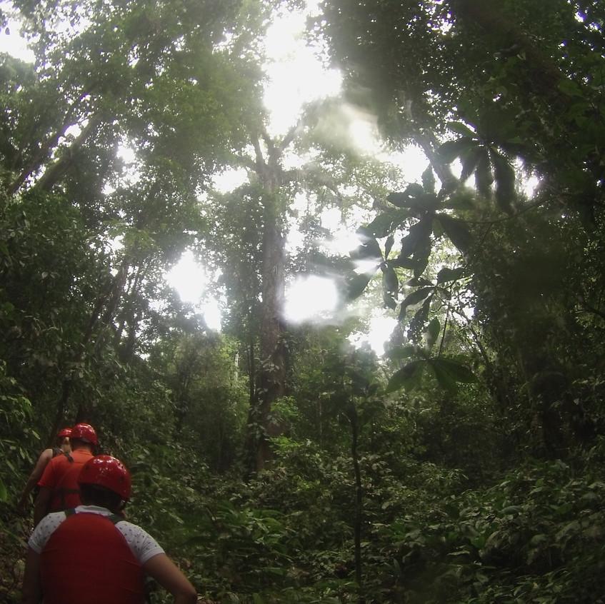 durch den Urwald zur Höhle