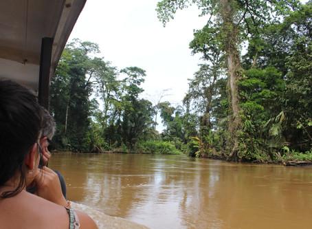 Das Leben am Fluss in Tortuguero *Costa Rica*