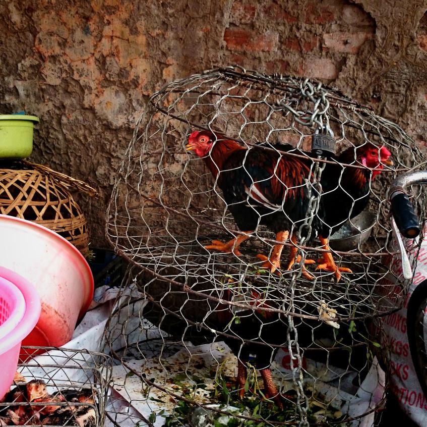 Hühner neben einem Restaurant