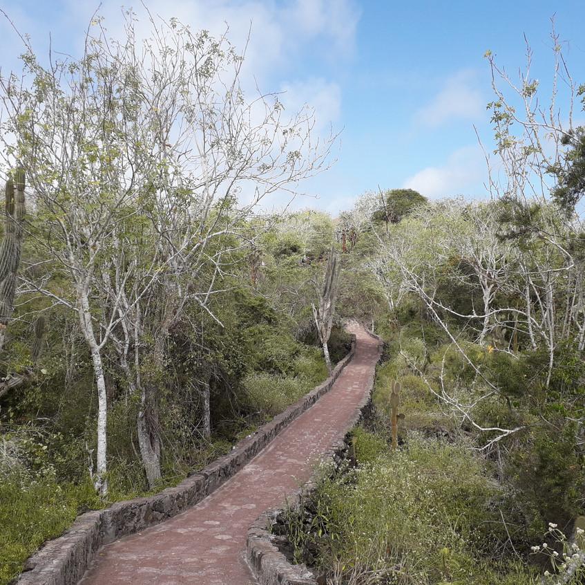 Weg zu Tortuga Bay