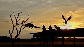 Drei Tage im Pantanal *Brasilien*