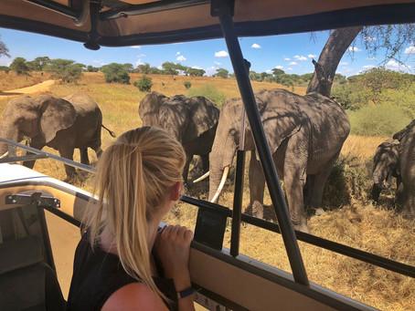 Safari-Fieber im Tarangire Nationalpark *Tansania*