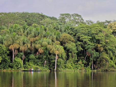 Into the wild: das südliche Amazonasgebiet um Puerto Maldonado *Peru*