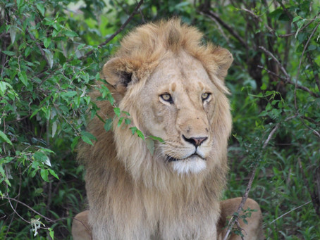 Faszination Masai Mara *Kenia*