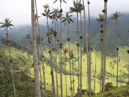 Traumhaft schönes Salento *Kolumbien*