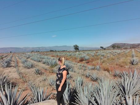 Tequila - dann esse ich mal wieder Obst *Mexiko*