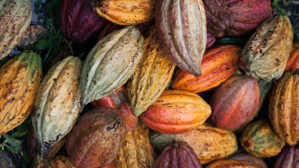 ECOM / Cacao Latitudes