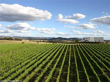 Beechworth Wine Region