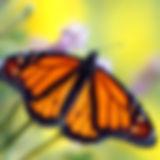Butterflies Beyond Borders, EB, orphan, epidermolysis bullosa, borders, butterflies