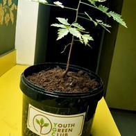 Plant Donation