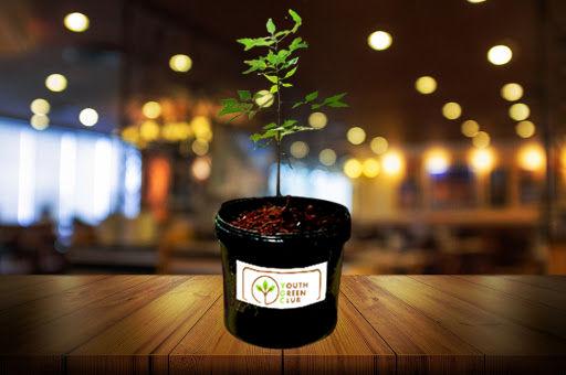 youth green club tree gift.jpg