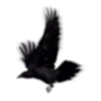 kisspng-bird-american-crow-common-raven-