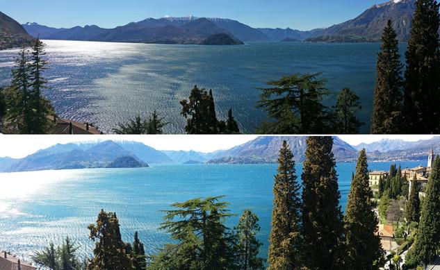 panorama-hydrangea-small.jpg
