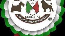 Nuestro Estilista Canino Premiado